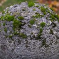 Moss grows fat on a rolling stone