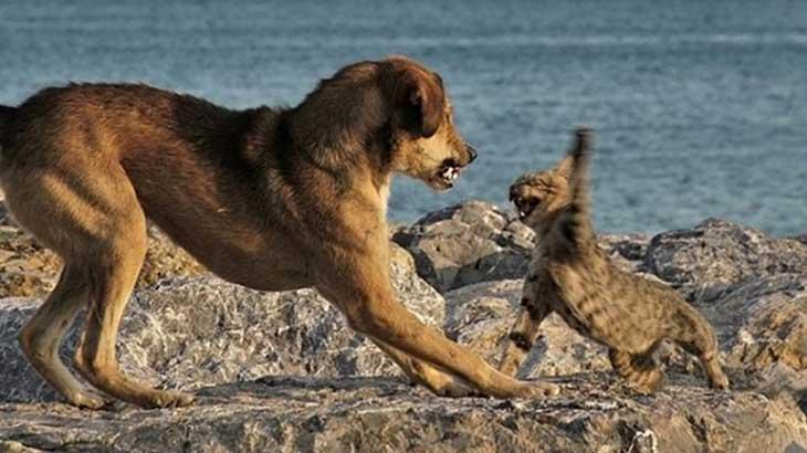 Kat & hond
